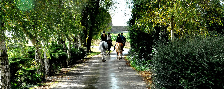 manege-flemming-paarden-lessen-westmaas