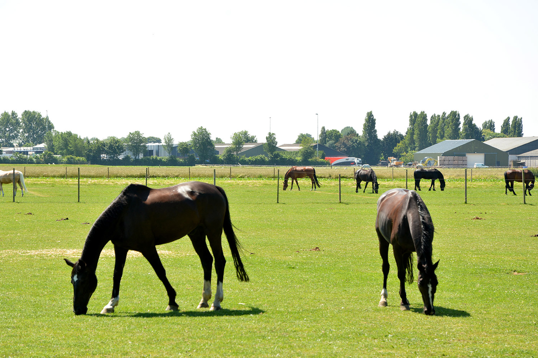 manege-flemming-paarden-zuid-holland-westmaas